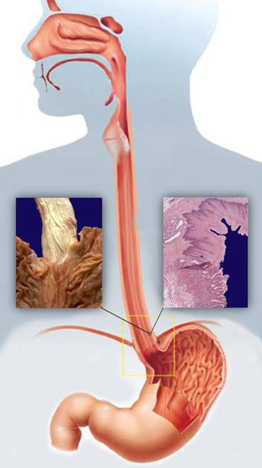 Anatomija1